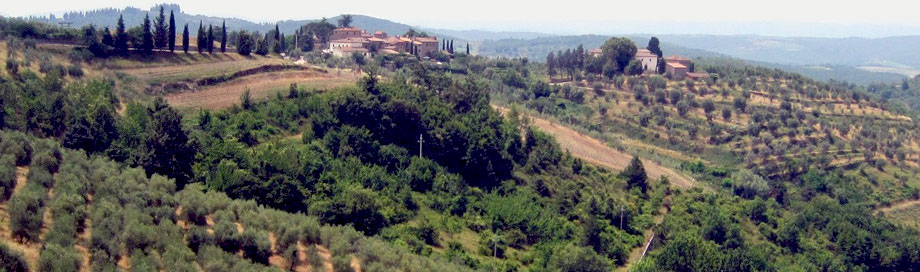 home page picture - Toscany vinyards
